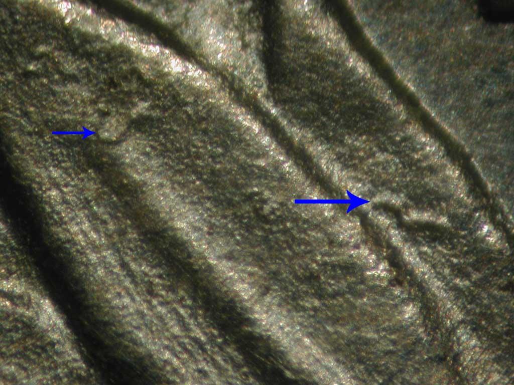 369_sqg-leaf